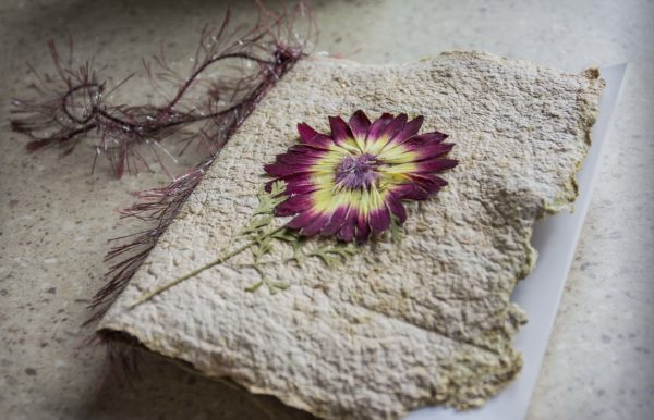 Memory Seed Cards Create Seasonal Memorials
